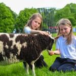 Glendeer-Pet-Farm-11